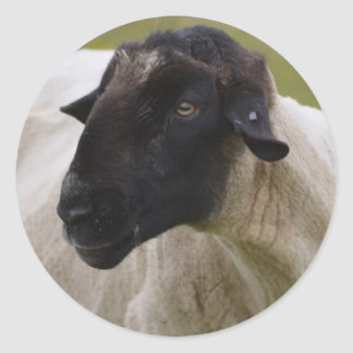 Black Faced Sheep Classic Round Sticker