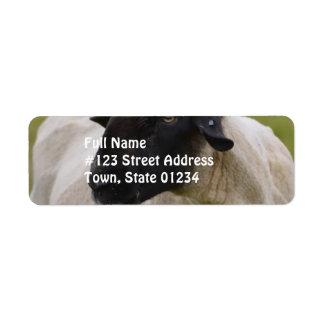 Black Faced Sheep Return Address Label