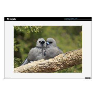"Black Faced Woodswallow, Artamus cinereus 15"" Laptop Decal"