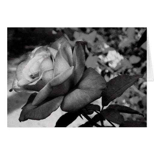 Black Flower Greeting Card