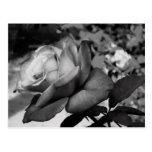 Black Flower Postcard