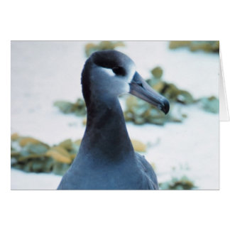Black footed Albatross Greeting Cards