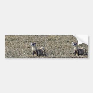 Black-Footed Ferret Bumper Sticker