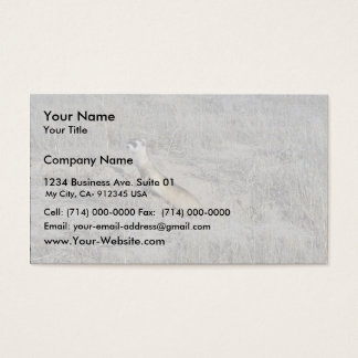Black-Footed Ferret Business Card