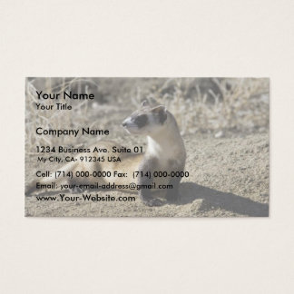 Black-Footed Ferret (captive) Business Card
