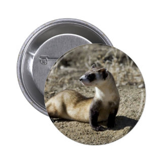 Black-Footed Ferret (captive) Button
