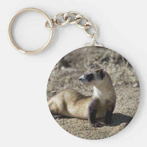 Black-Footed Ferret (captive) Key Chains