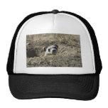 Black-Footed Ferret (captive) Mesh Hat