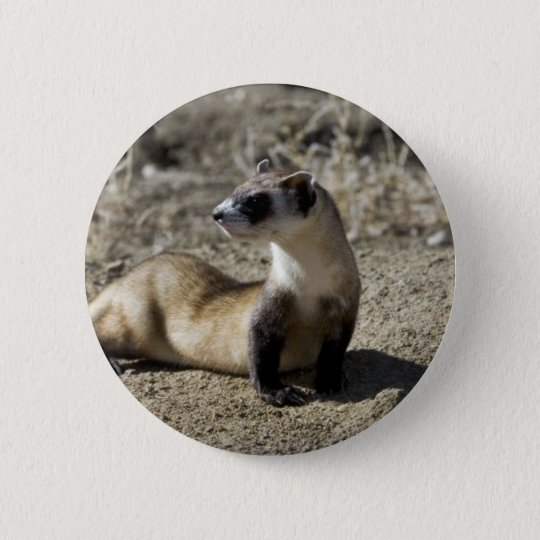 Black-Footed Ferret (captive) Pinback Button