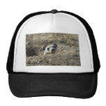 Black-Footed Ferret (captive) Trucker Hat