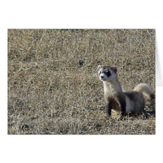 Black-Footed Ferret Card