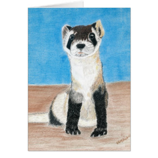 black footed ferret card