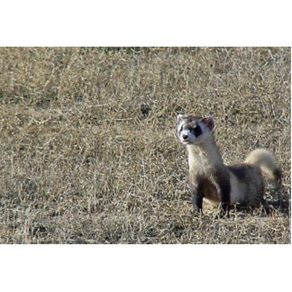 Black-Footed Ferret Cutout