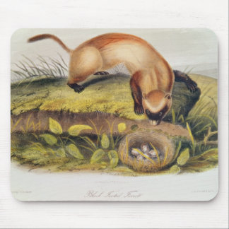 Black-footed Ferret Mouse Pad