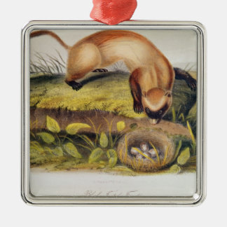 Black-footed Ferret Christmas Ornament