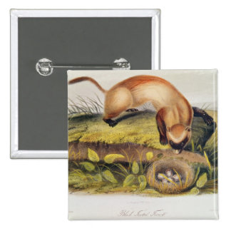 Black-footed Ferret Pinback Button