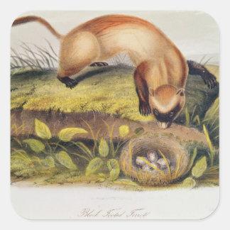 Black-footed Ferret Square Sticker