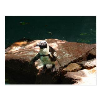 """Black Footed Penguin"" by Carter L. Shepard"" Postcard"