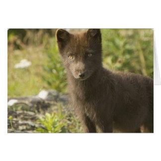 Black Fox Greeting Card