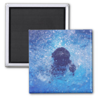 Black French Bulldog 2 Inch Square Magnet
