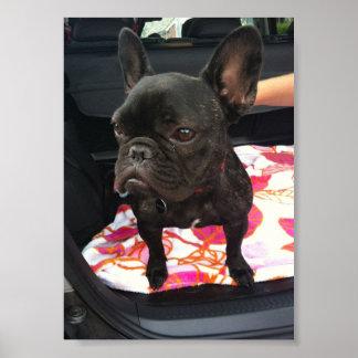 Black French Bulldog Print
