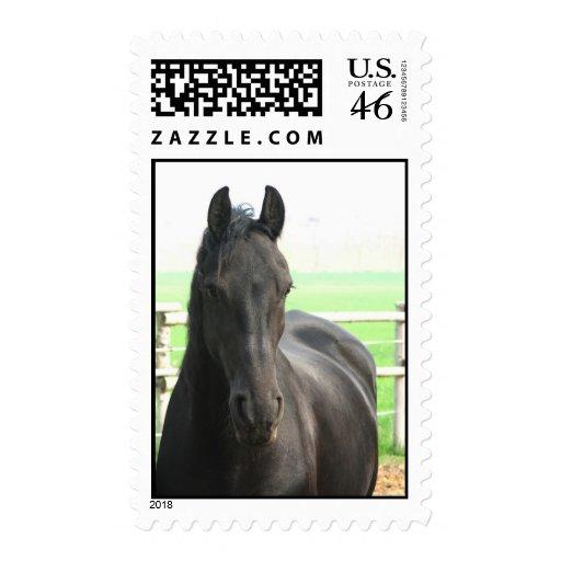 Black Friesian Horse Postage Stamp