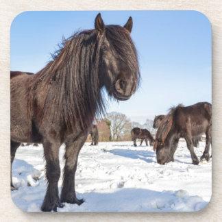 Black frisian horses in winter snow beverage coaster