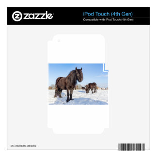 Black frisian horses in winter snow decal for iPod touch 4G