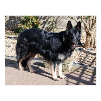 black german shepherd full.png postcard