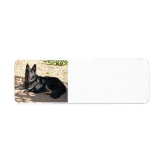 black german shepherd laying.png label