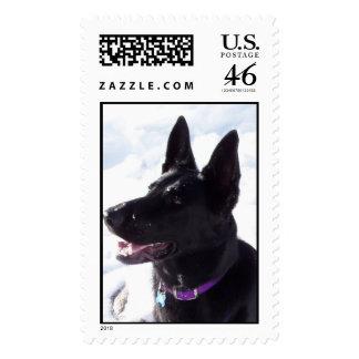 Black German Shepherd Postage Stamp