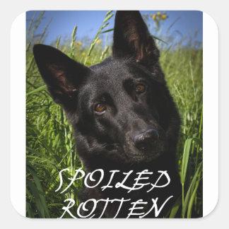 black german shepherd spoiled rotten square sticker