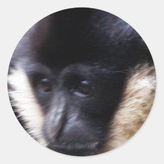 Black Gibbon Ape Face Closeup Pastel Round Sticker