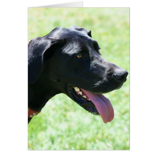 Black Great Dane notecard