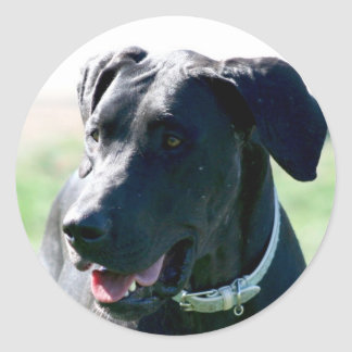 Black Great  Dane stickers