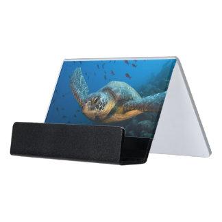 Black (Green) Turtle (Chelonia agassizi) Desk Business Card Holder