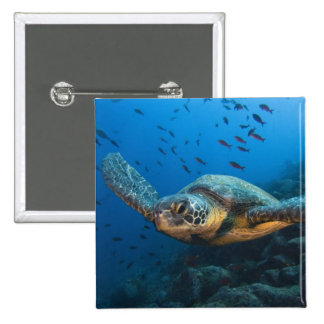 Black (Green) Turtle (Chelonia agassizi) off 2 Inch Square Button