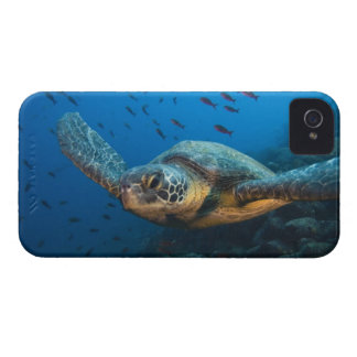 Black (Green) Turtle (Chelonia agassizi) off iPhone 4 Cover