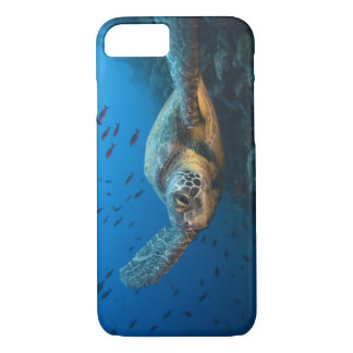 Black (Green) Turtle (Chelonia agassizi) off iPhone 8/7 Case