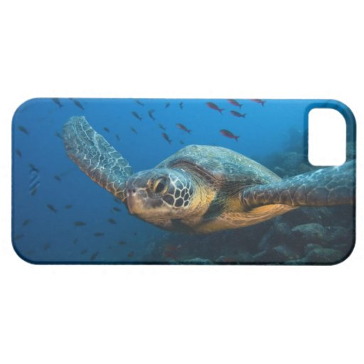 Black (Green) Turtle (Chelonia agassizi) off iPhone SE/5/5s Case