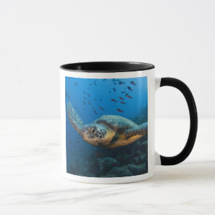 Black (Green) Turtle (Chelonia agassizi) off Mug