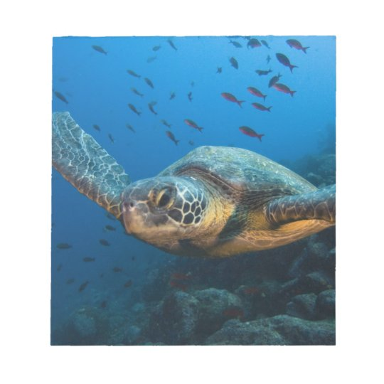 Black (Green) Turtle (Chelonia agassizi) off Notepad