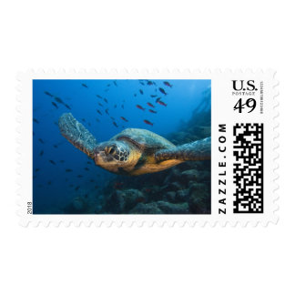 Black (Green) Turtle (Chelonia agassizi) off Postage Stamp