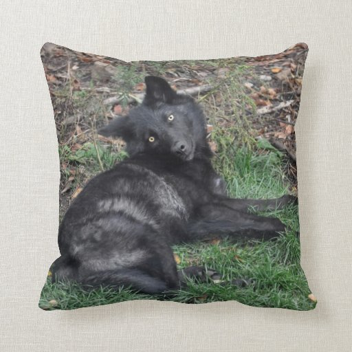 Black Grey Wolf Pup Wildlife Throw Pillow Zazzle