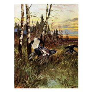 Black Grouse Mating Display Postcard
