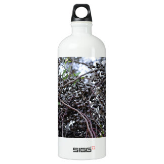 Black Gum nuts with its branches Aluminum Water Bottle