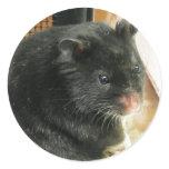 Black Hamster Classic Round Sticker