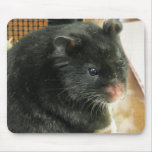 Black Hamster Mouse Pad