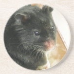 Black Hamster Photo Sandstone Coaster