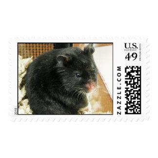 Black Hamster Postage
